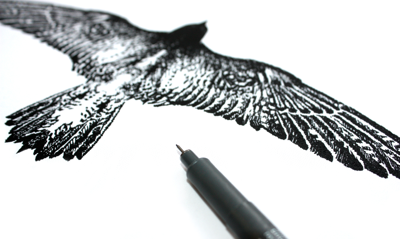 Daniëls BV illustratie torenvalk – Studio Mooijman en Mittelberg, Grafisch ontwerpbureau, Den Haag