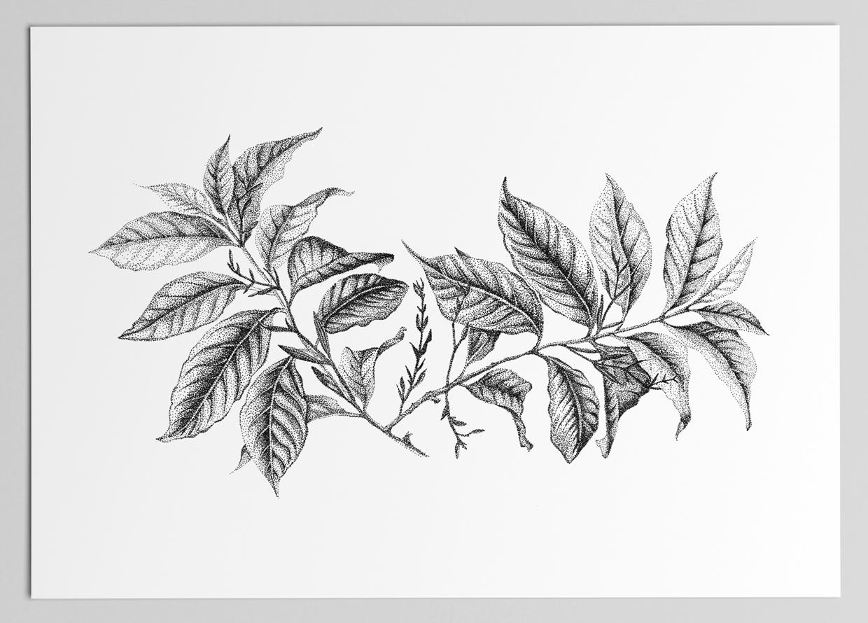 Illustratie – Studio Mooijman en Mittelberg, Grafisch ontwerpbureau, Den Haag