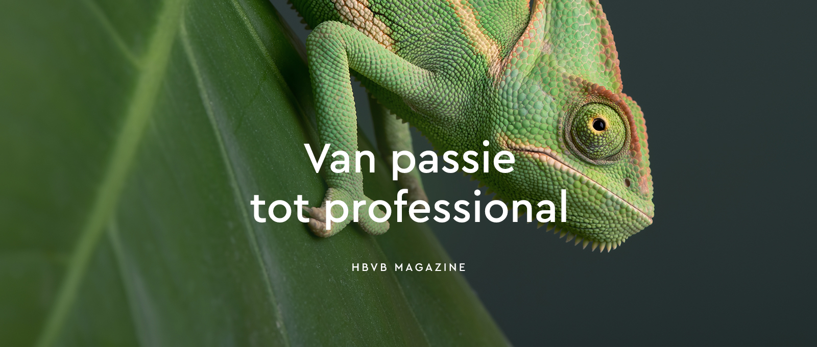 Aeres Training Centre Barneveld – Studio Mooijman en Mittelberg, Grafisch ontwerpbureau, Den Haag